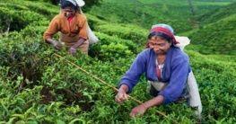 Ceylon Tee